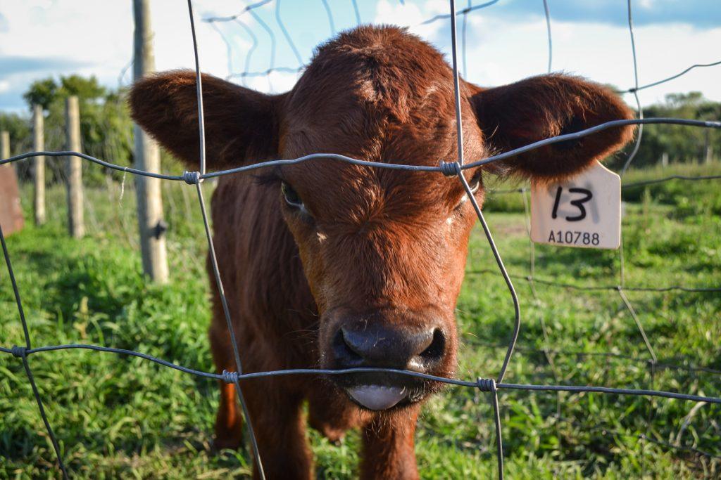 grass fed beef winnipeg