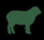 grass-fed-lamb icon